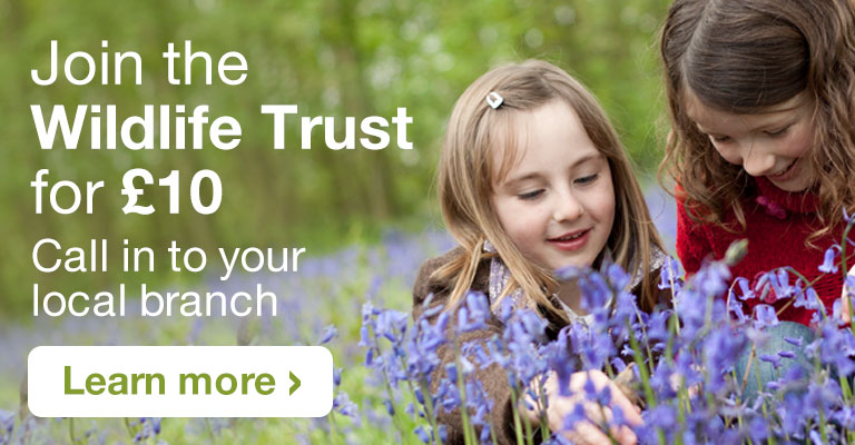Join the Wildlife Trust for £10 - Call in to your local branch